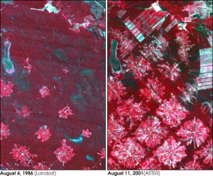 09_Bolivia_satellite_deforestation_1986_2001_